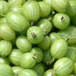 Gooseberry Fragrance Oil